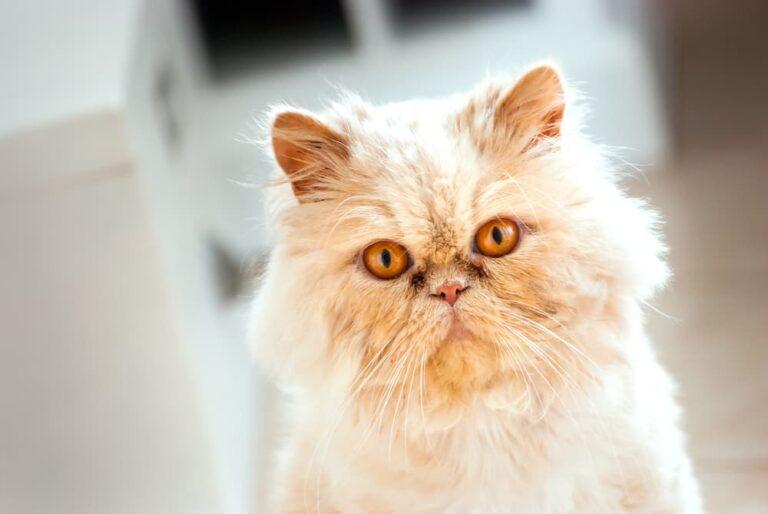 FLUTD in cats