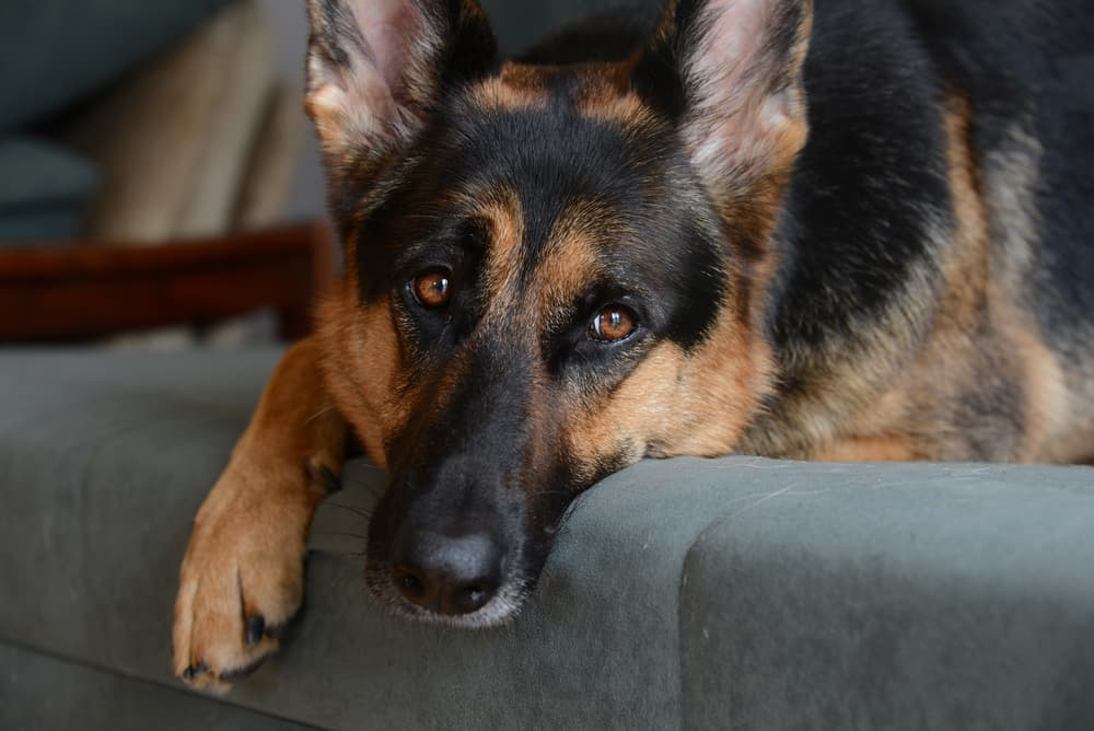 Causes of hot spots on dogs