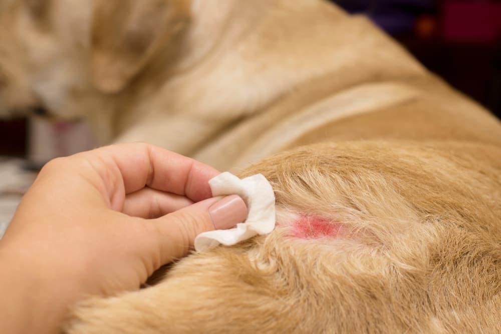 Symptoms of hot spots on dogs