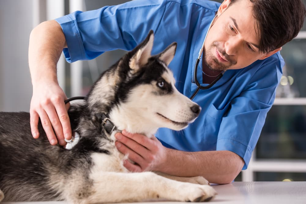 Veterinary checkup to prevent staph infection