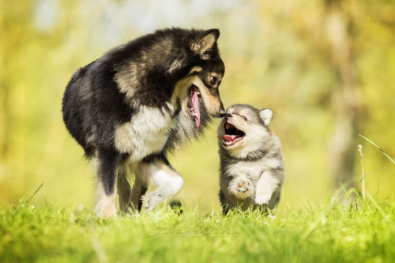 dog with puppy