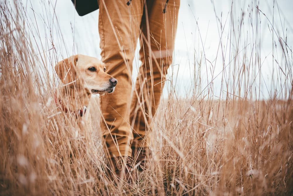 Causes of Rocky Mountain Spotted Fever in dogs
