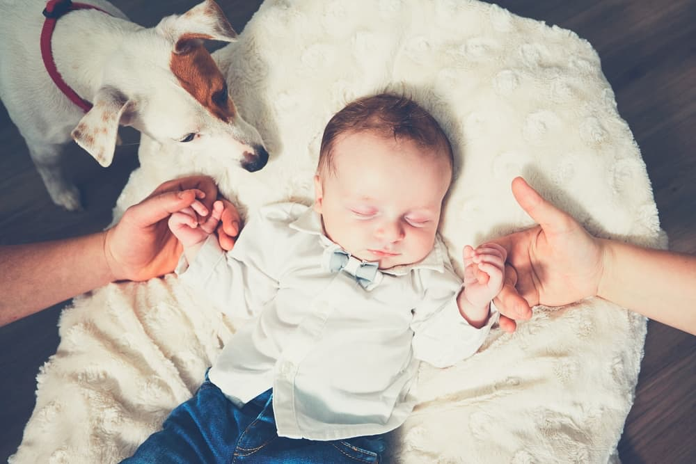 New babies can cause depression in dogs
