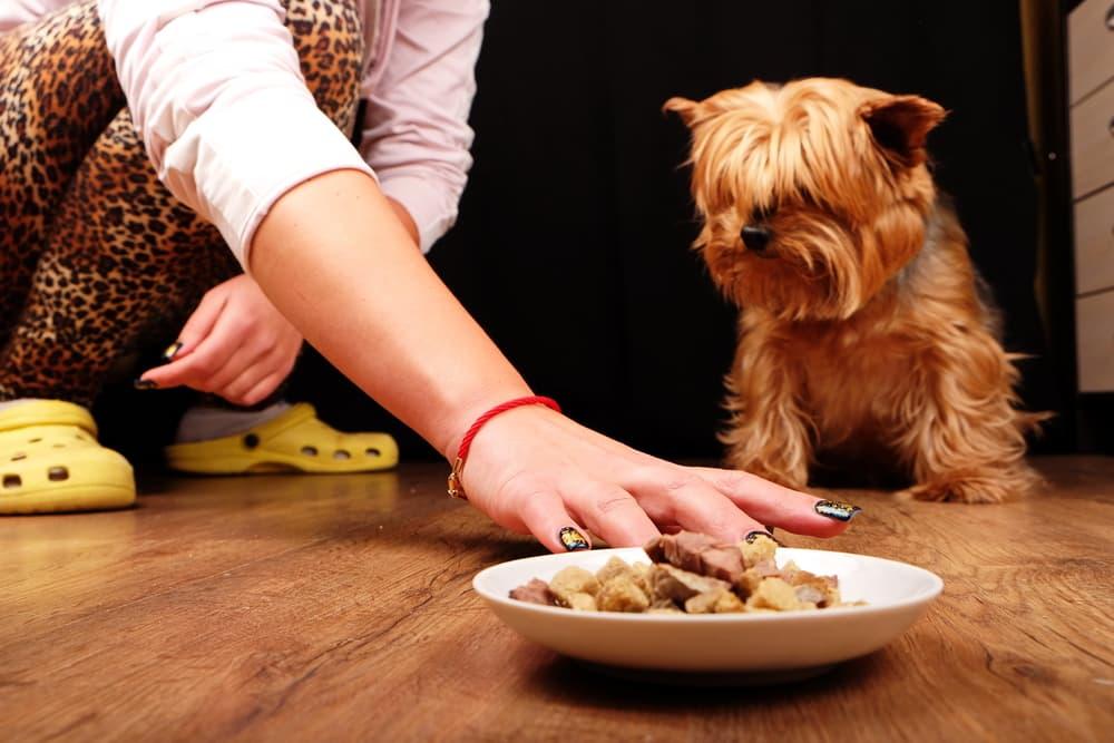Dog won't eat food