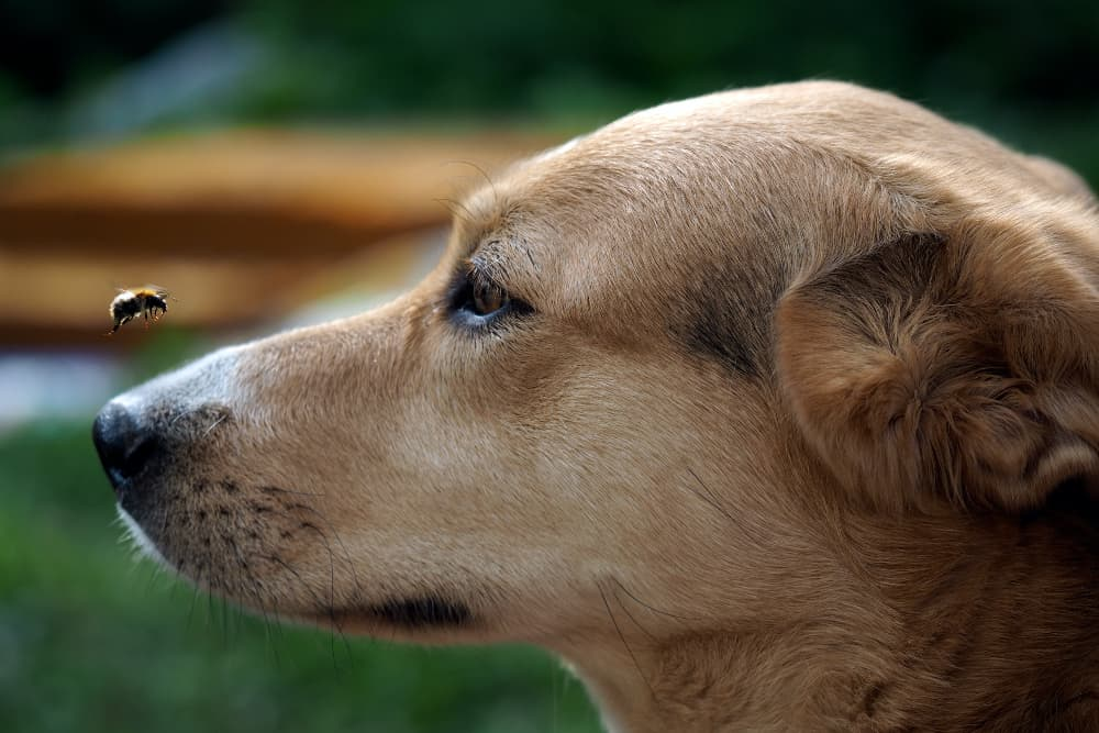 Colloidal Silver for Dogs: Is it Safe?