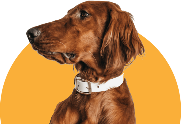 Pet care tips and advice, backed by veterinarians. Learn about training, nutrition, behaviors, and more.