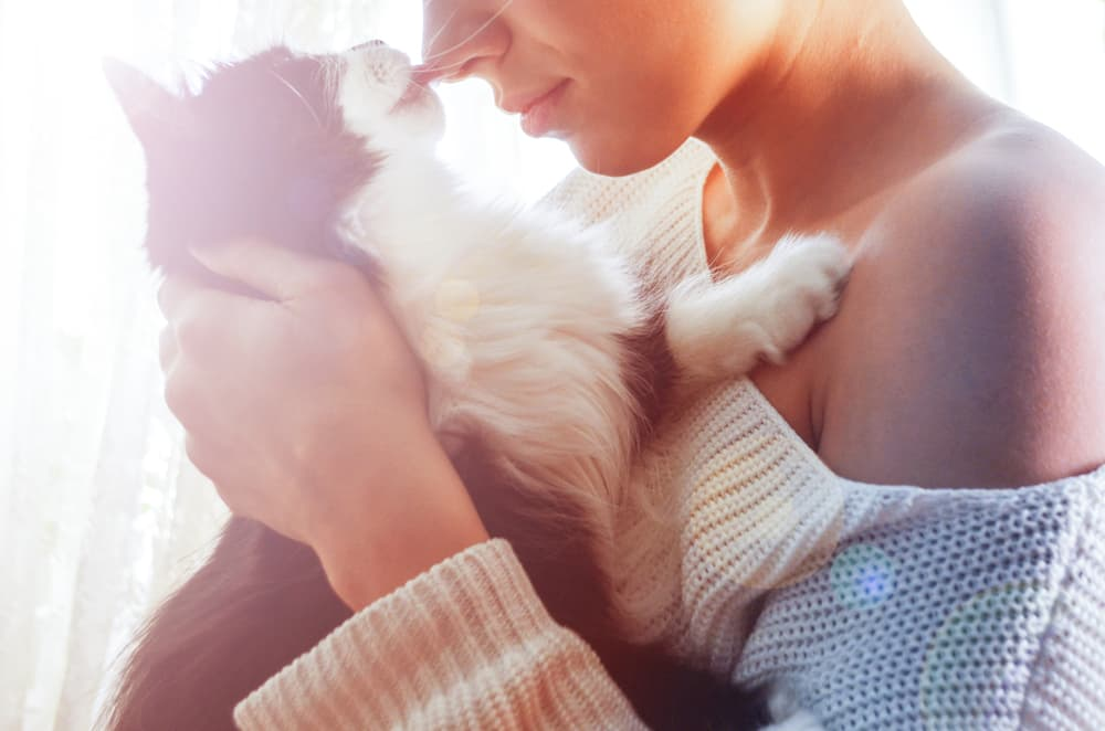 Cats lick as a sign of affection