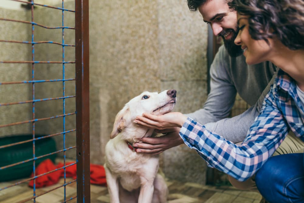 Dog shelters can spread ringworm
