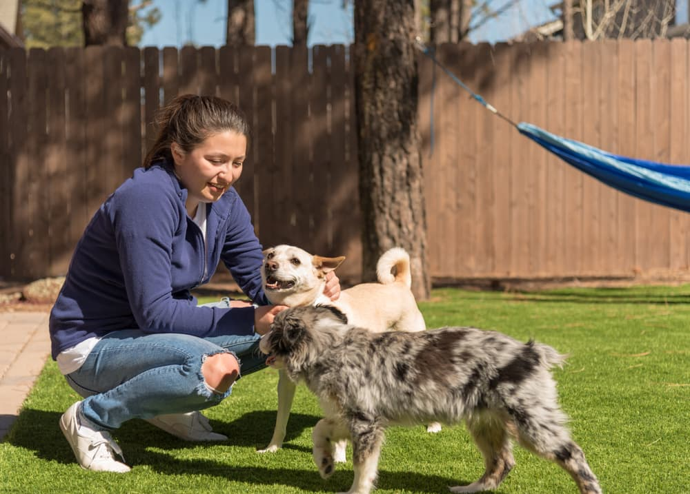 Woman playing with dogs in backyard