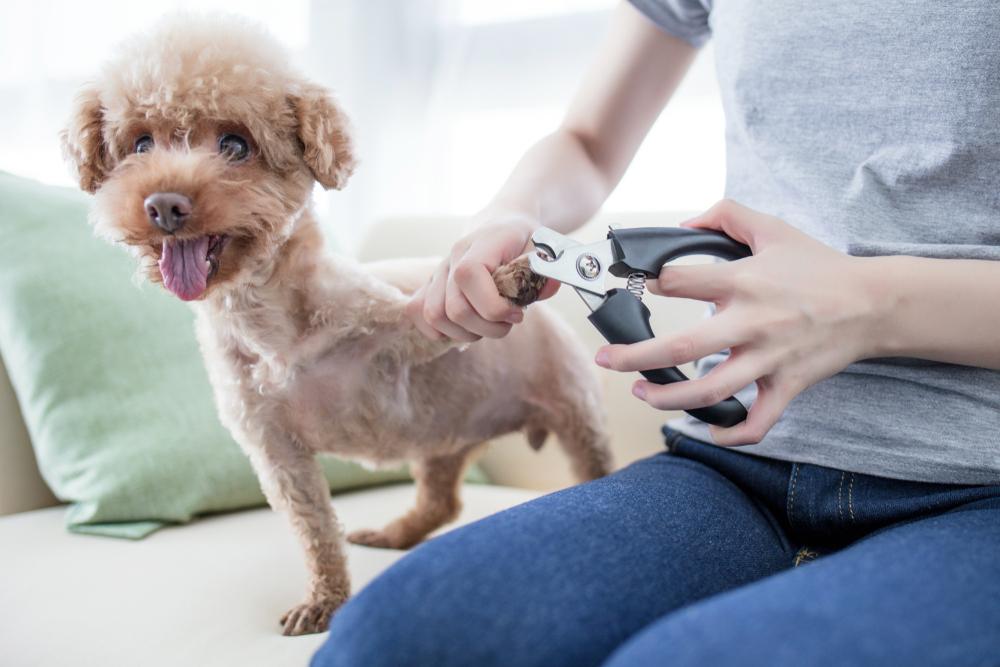 Woman cutting a dog's nails