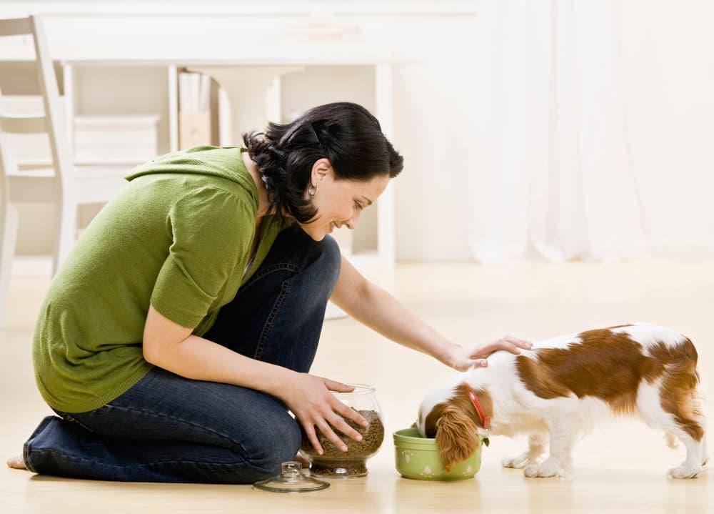 Woman watching dog eat food