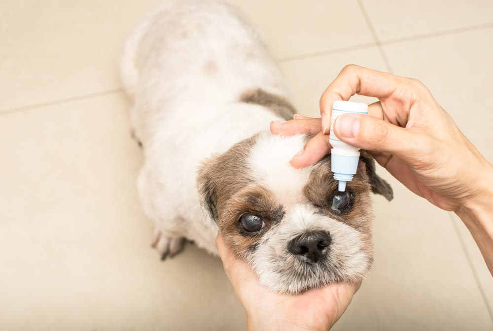 eye drops for cataracts in dogs