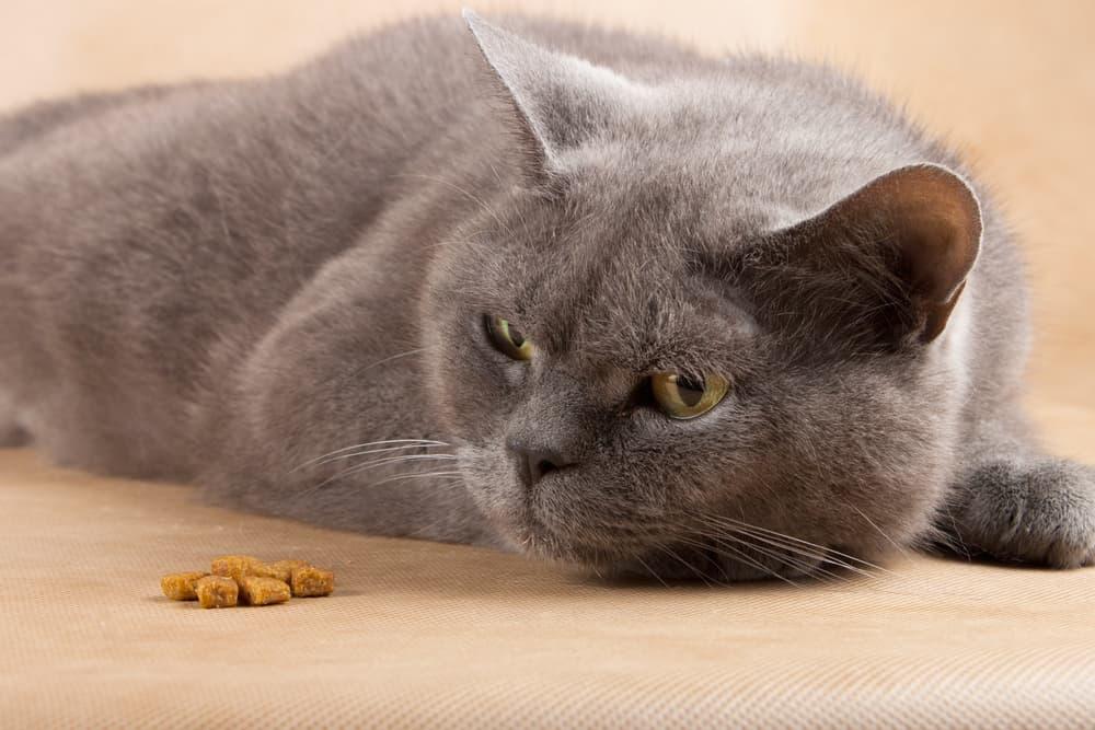 Cat refusing to eat