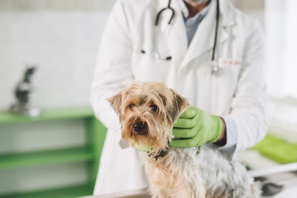 dog at veterinary clinic