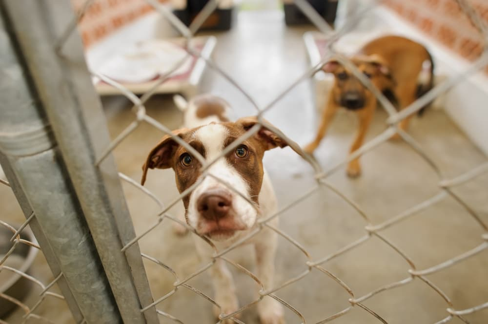 two dogs at animal shelter