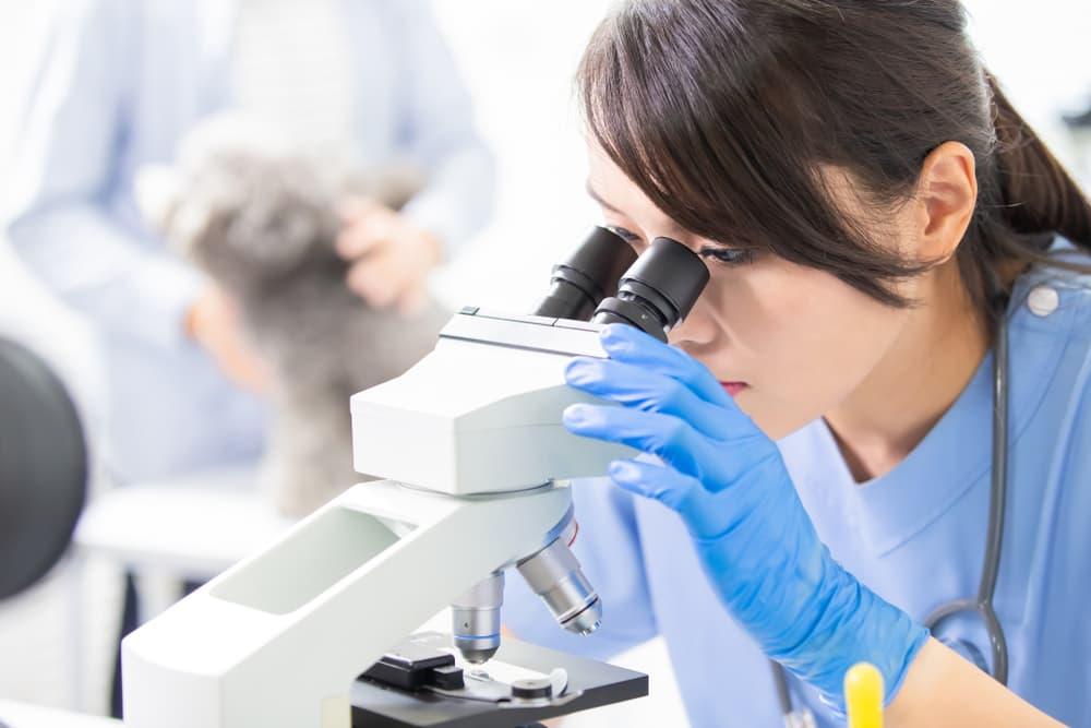 veterinarian looks through microscope