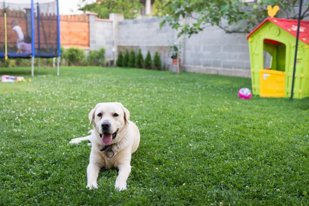 Deze Lijst met 9 Giftige Dingen voor Honden in Je Achtertuin Moet Je Kennen