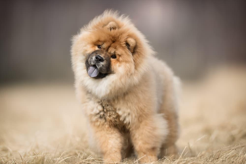 Fluffy dog outside
