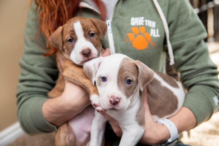 Best Friends Animal Society puppies