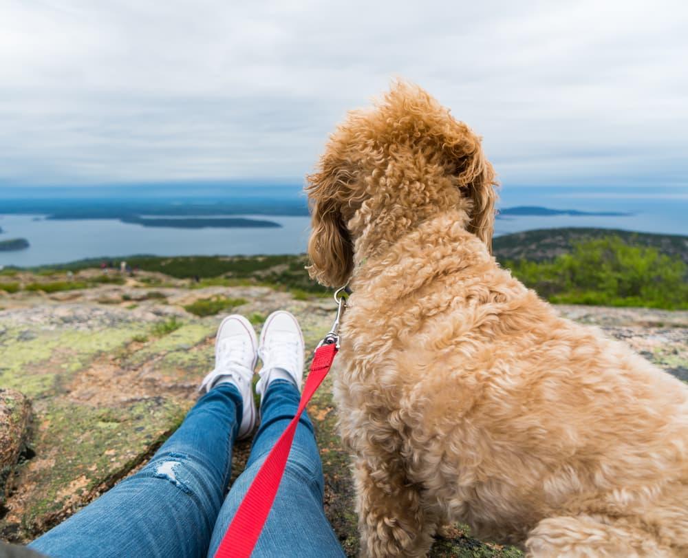 dog hiking in main at Acadia National Park