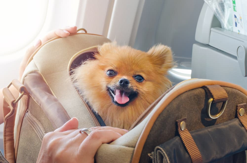 dog in pet carrier on plane