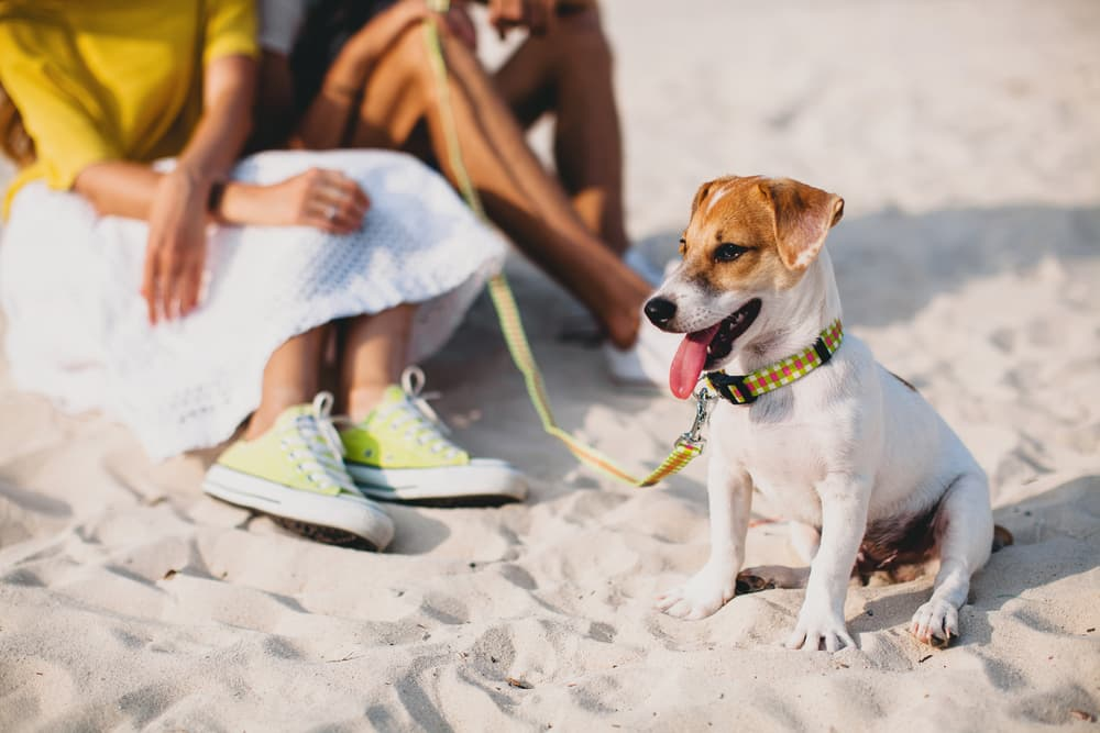 4 Dog Cone Alternatives That Actually Work
