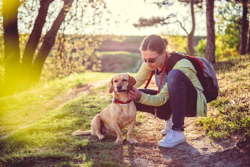 pet owner checks dogs for ticks