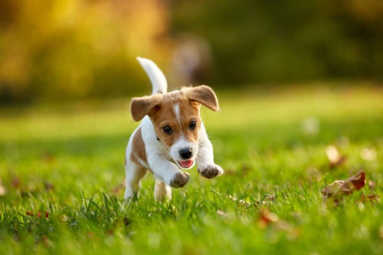 puppy plays in park