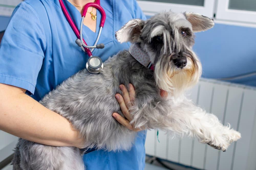 vet holds dog