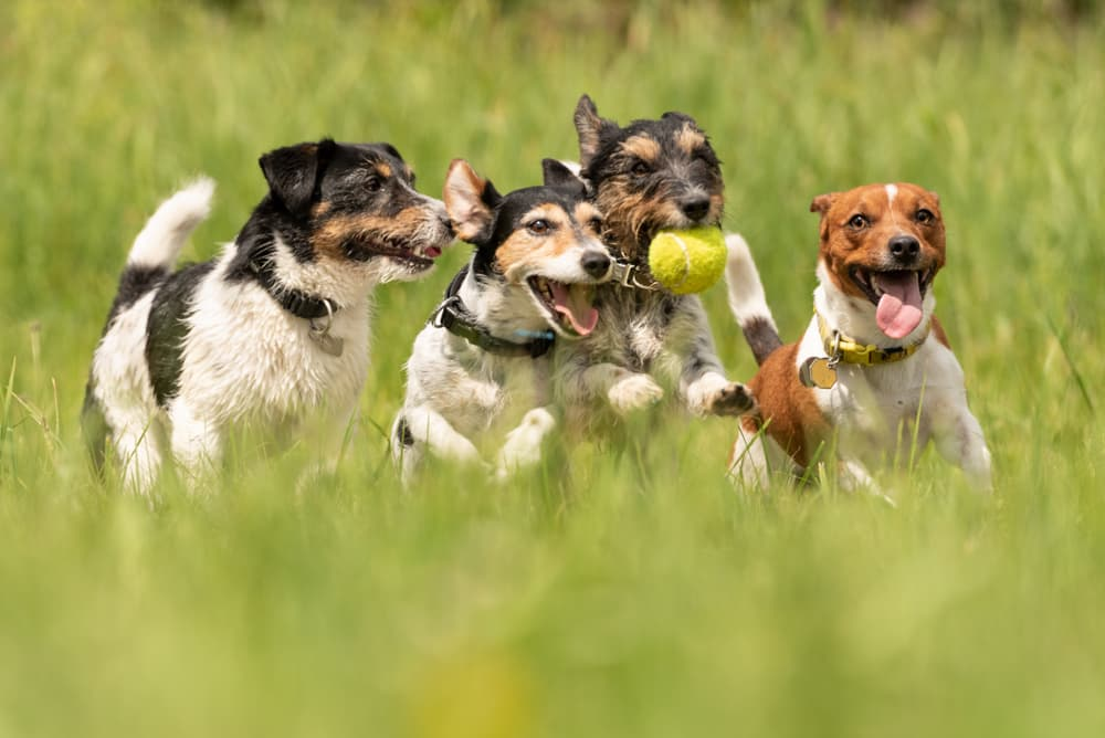 Why Internal Parasites in Dogs are Becoming More Common