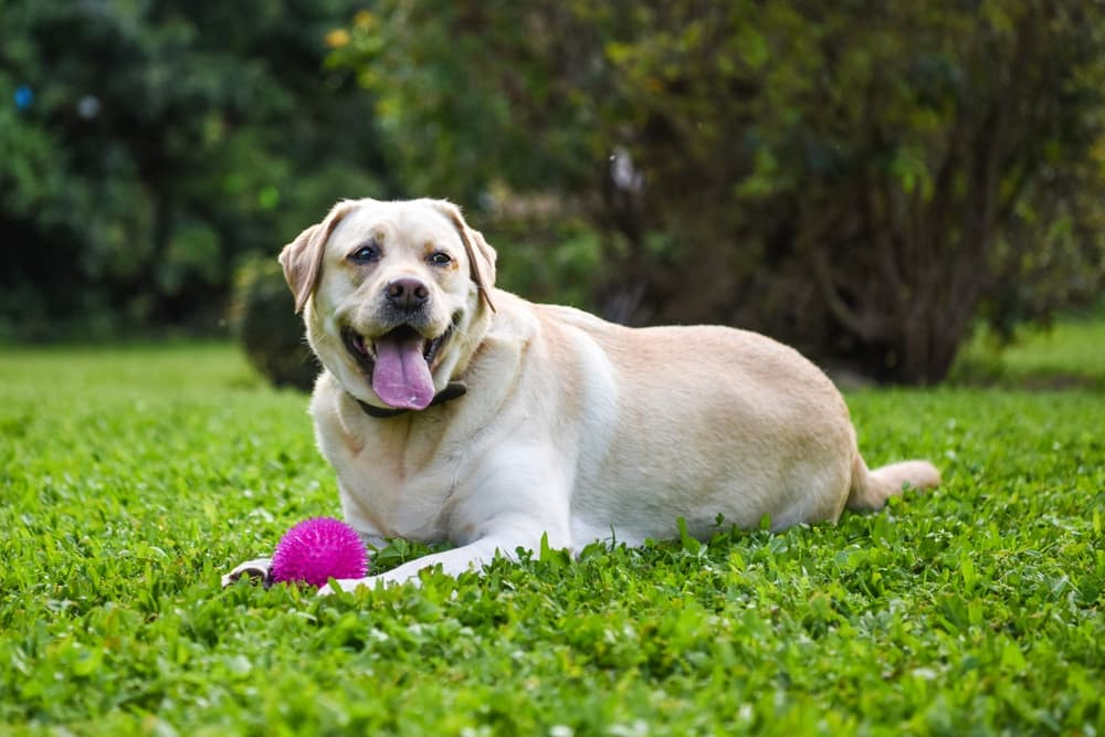 Dog in the grass with a ball