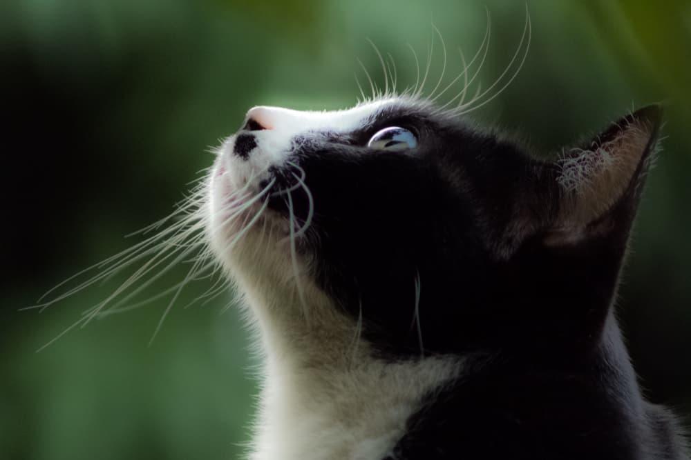 Cat looking up outside window
