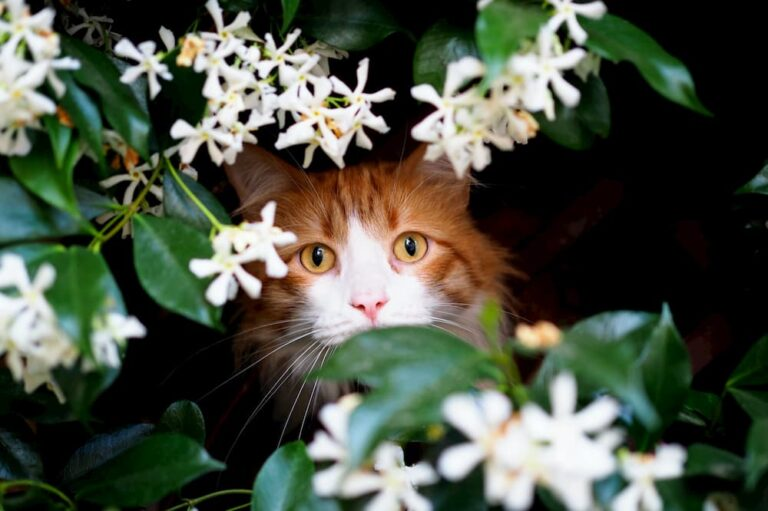 cat peering out from behind flowers