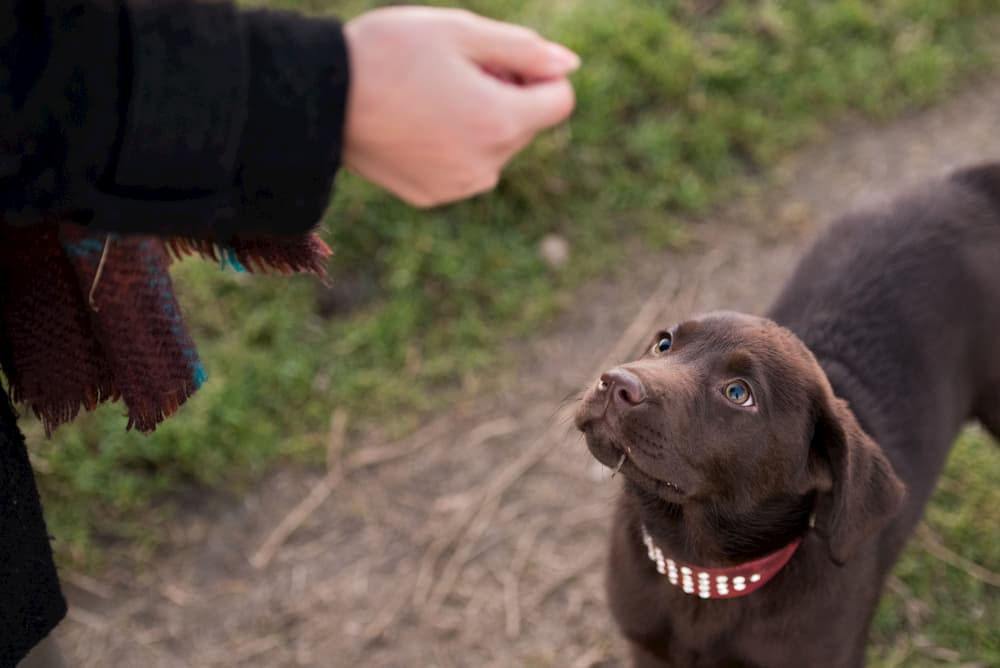dog looks up at owner
