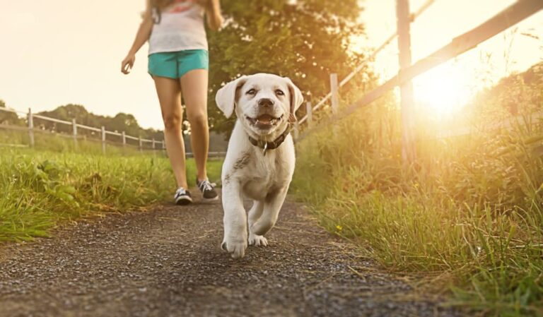 woman walks dog at sunset