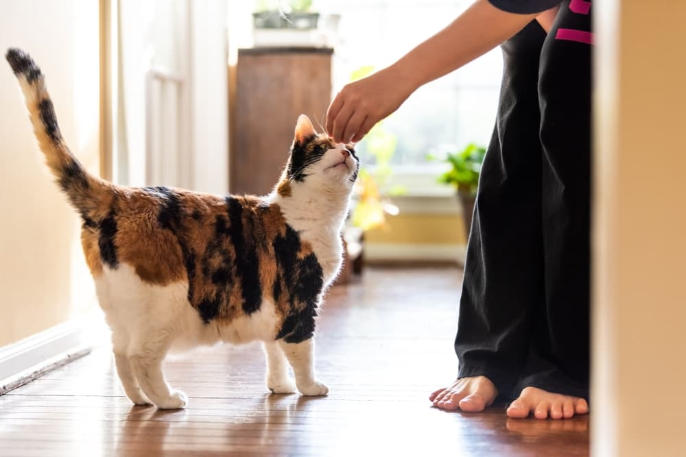 Woman trying to train cat