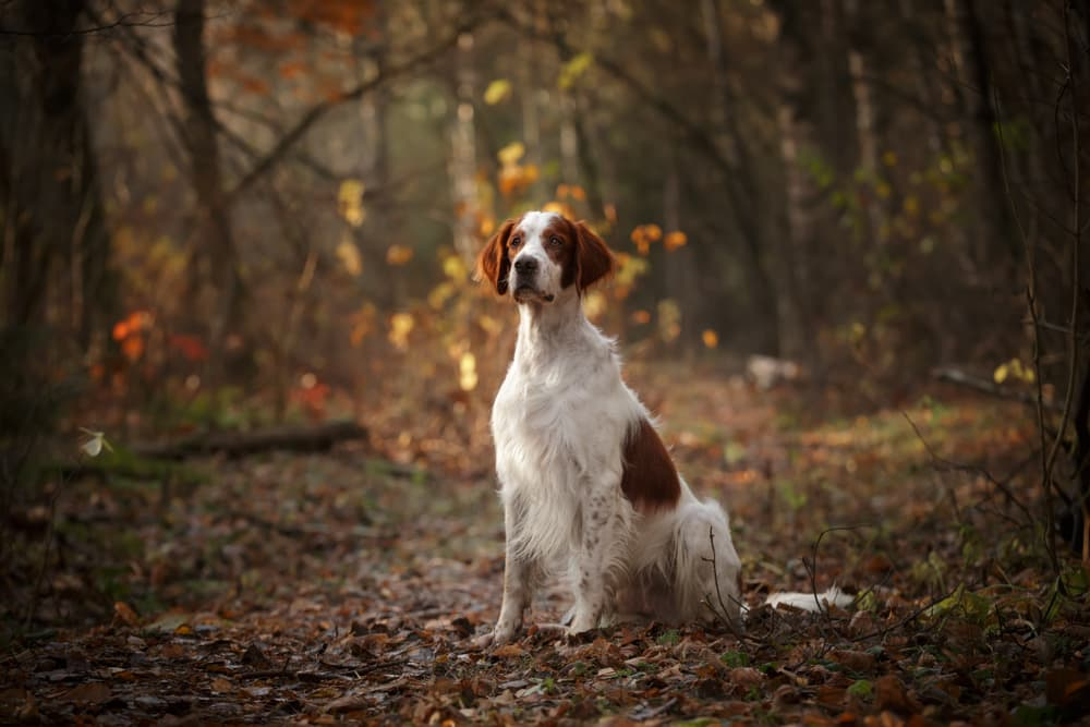 Lyme Vaccine for Dogs