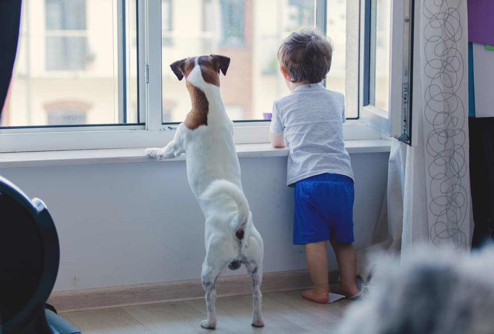 Dog and toddler look out window