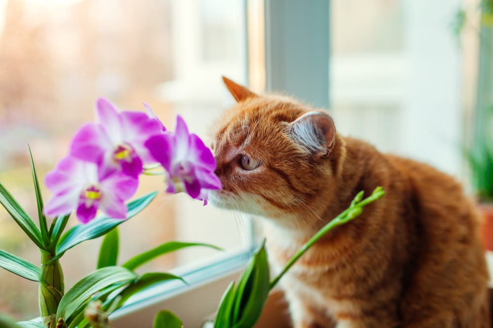 cat smelling orchid flower