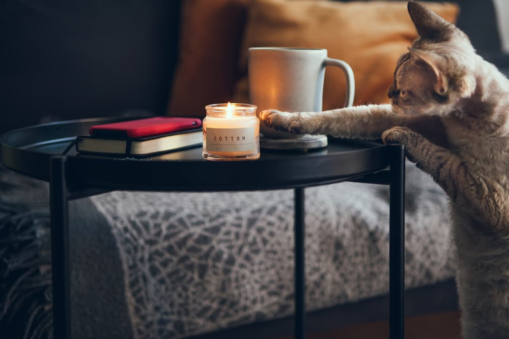 cat batting at candle