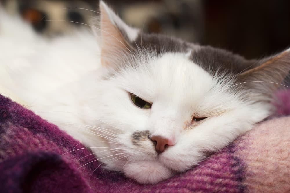 Cat not feeling well