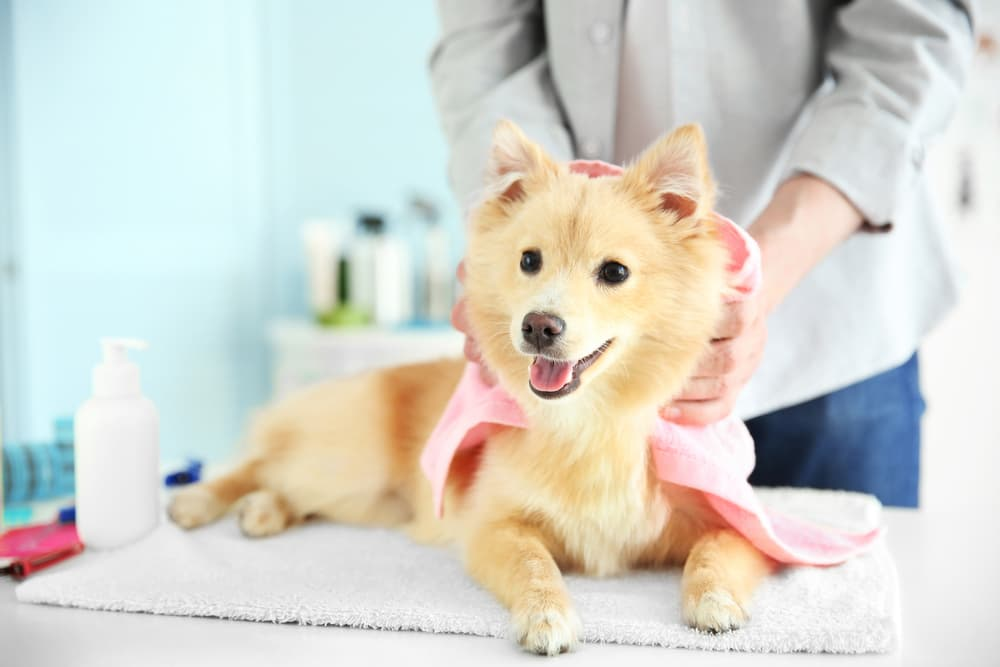 Dog Shedding: Why It Happens and When To Worry