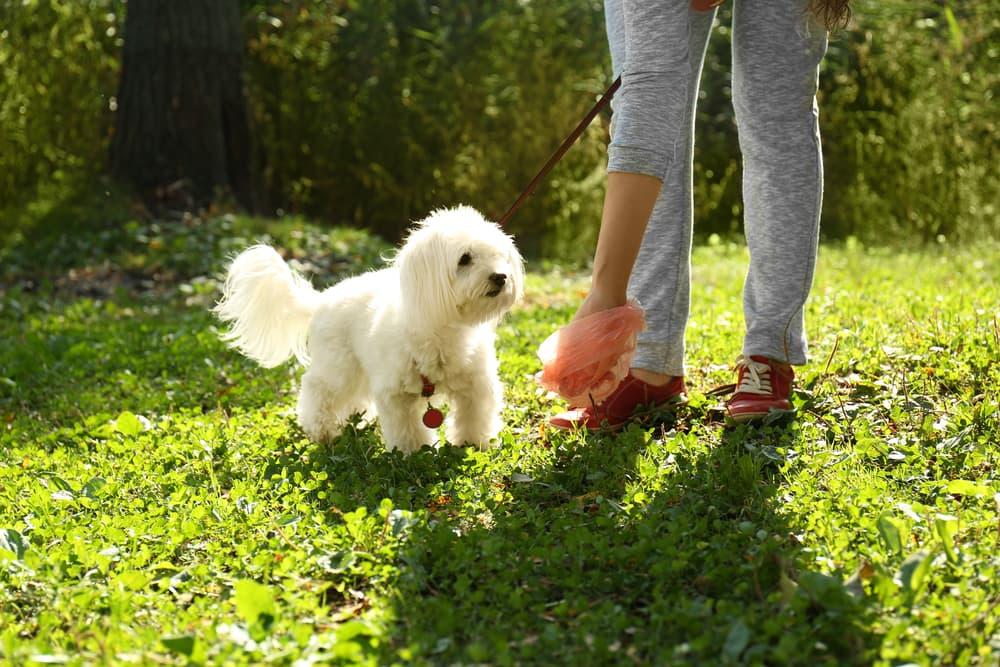 Dog owner picking up dog poop