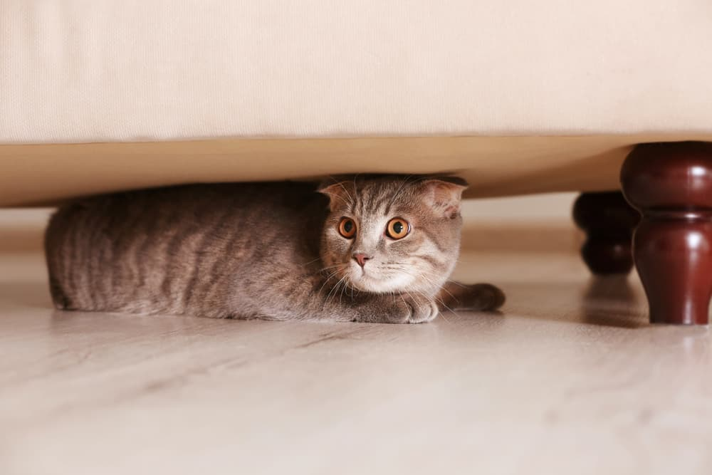 cat hiding from people