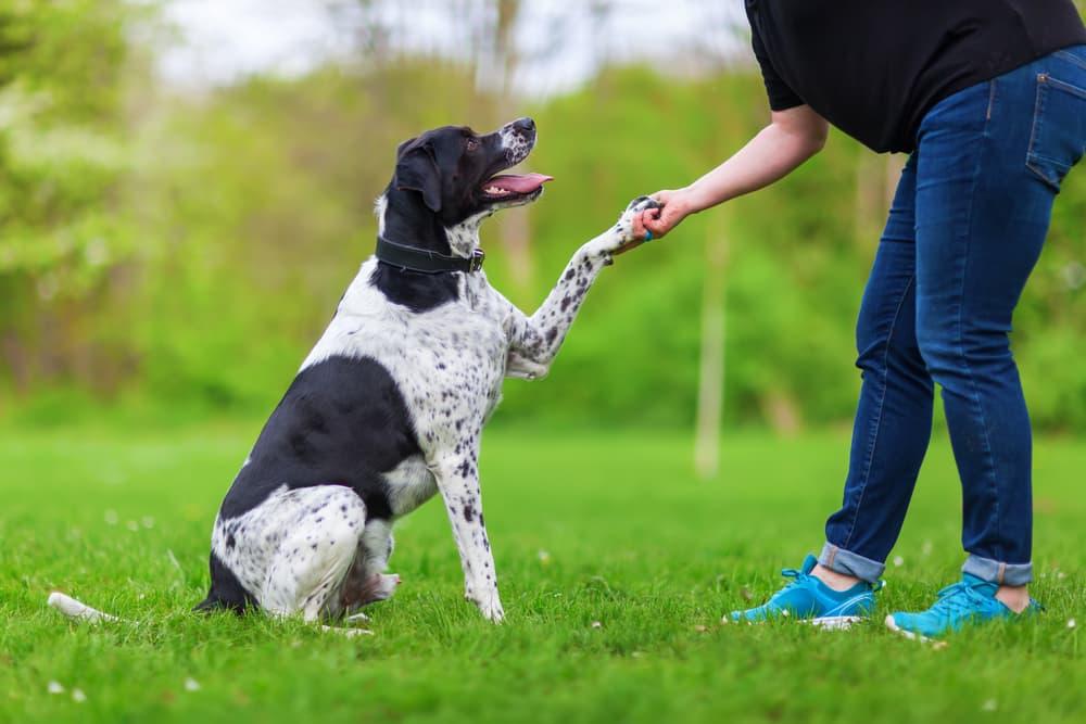 dog training in yard