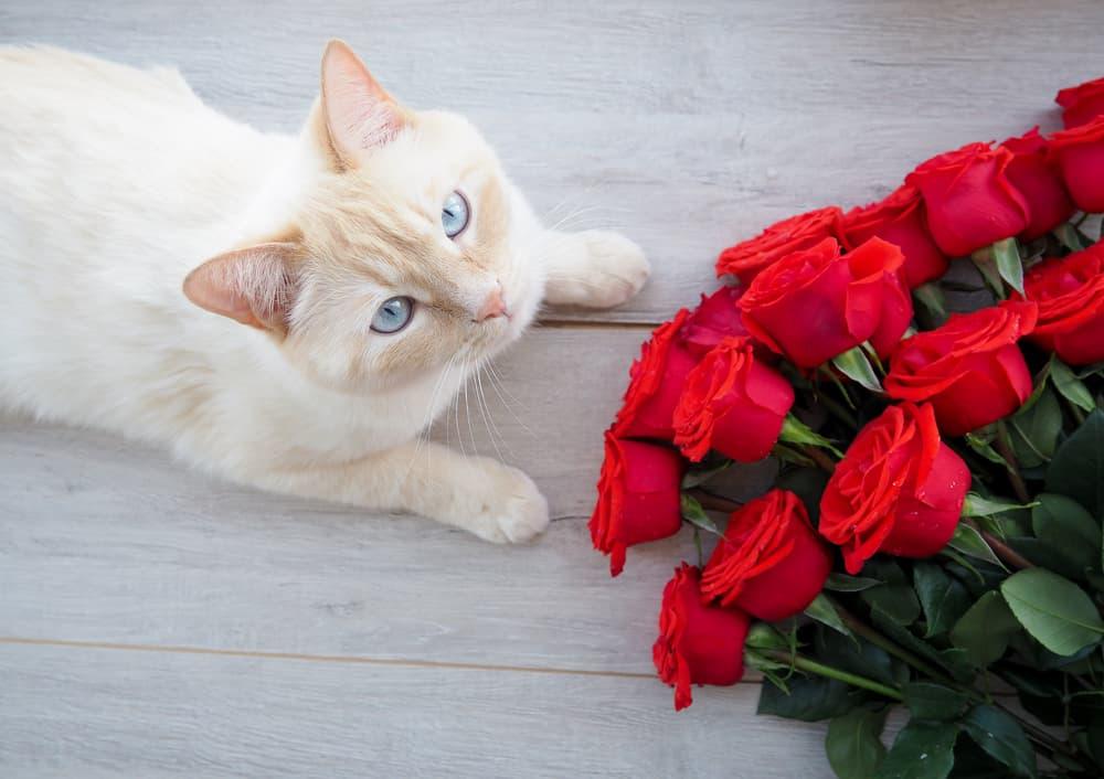 Cat next to roses