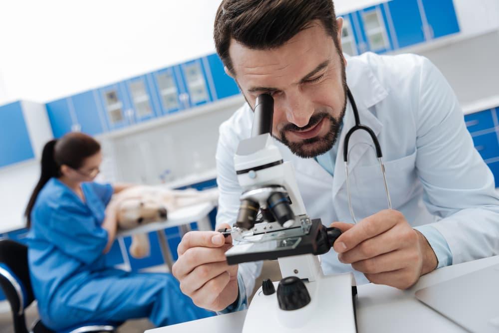 Veterinarian examining dog fecal sample