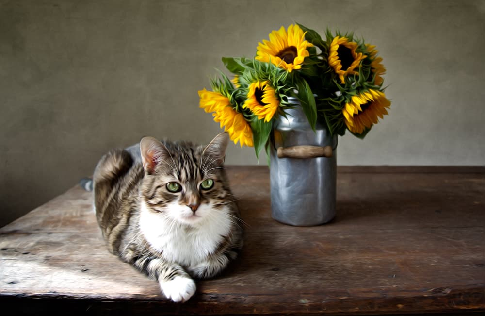 cat sitting by sunflowers