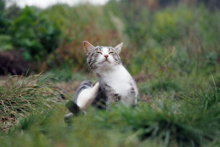 Cat scratching in the grass