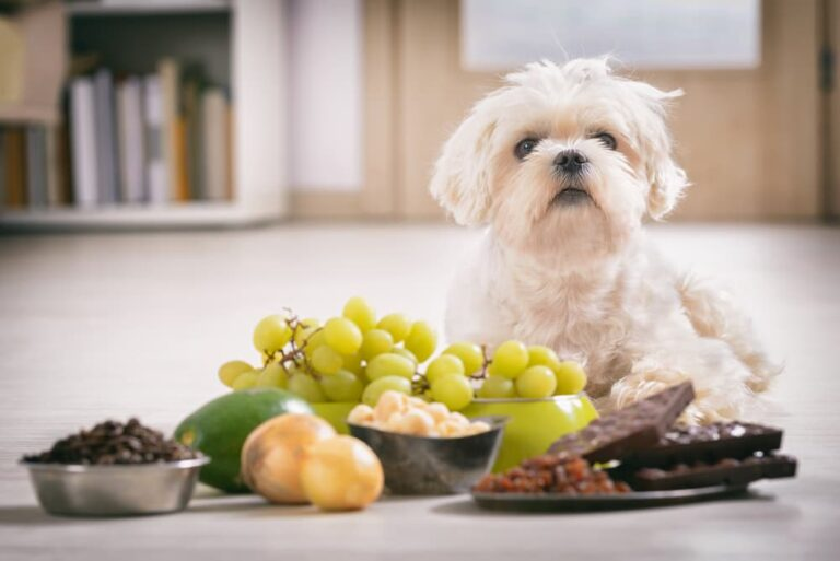 Dog sitting with lots of bad for them foods